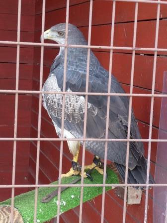鳥2 002