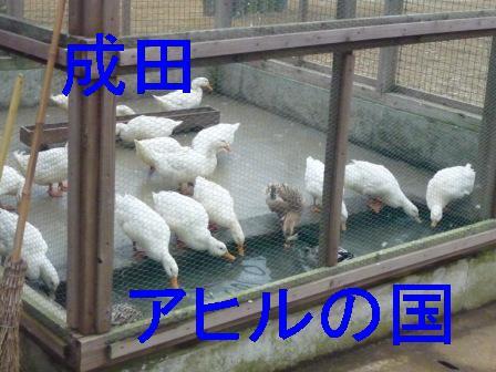 成田アヒルの国