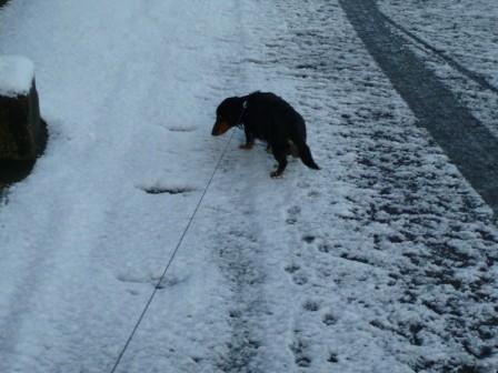 雪and誕生日☆ 009