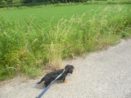 お散歩♪ 003