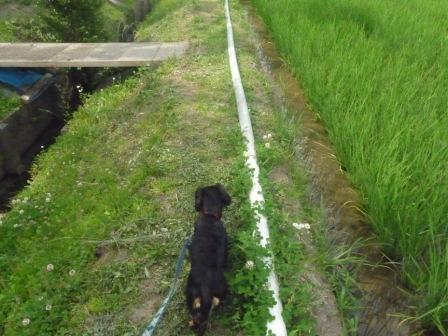 散歩♪ 001