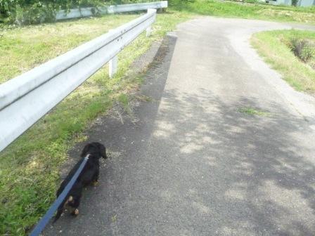 散歩♪ 002