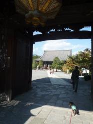 清涼寺P1060418