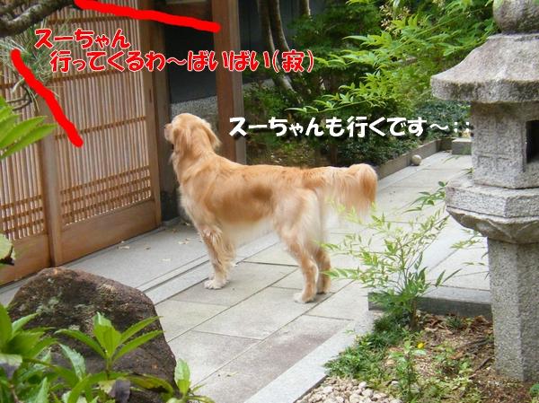 DSCF0098_20100910194020.jpg