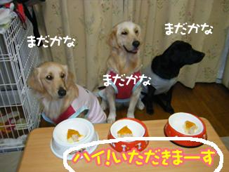 DSCF0257_20100906234341.jpg