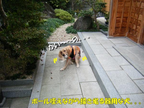 DSCF1008_20101026002104.jpg