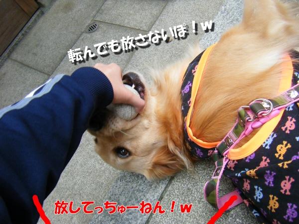 DSCF1013_20101026002103.jpg
