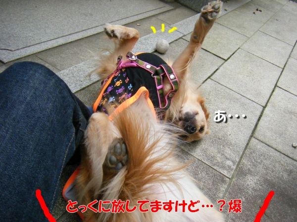 DSCF1027_20101026002148.jpg