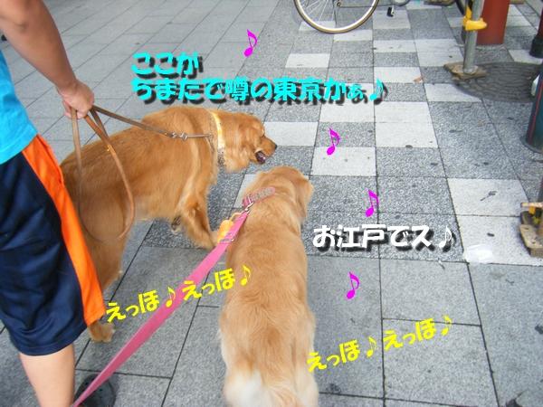 DSCF2020.jpg