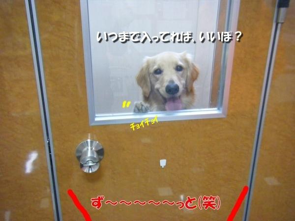 DSCF3001_20101114232723.jpg