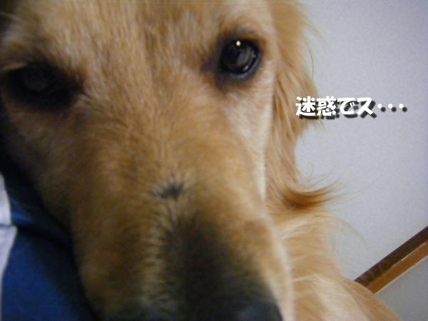 DSCF3009_20101031004225.jpg