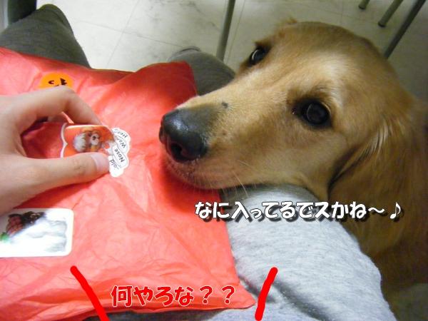 DSCF3010_20100930002711.jpg
