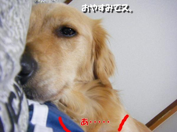 DSCF3011_20101031004224.jpg