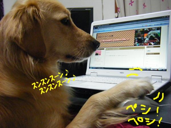 DSCF3018_20101031233309.jpg