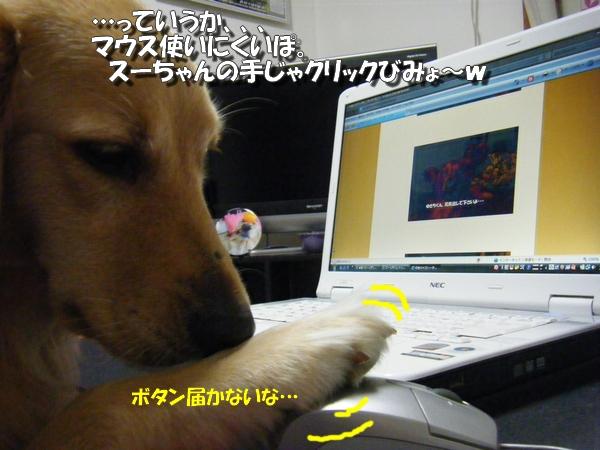 DSCF3029_20101031233409.jpg