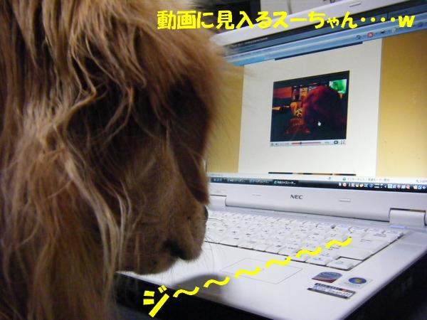 DSCF3030_20101031233408.jpg