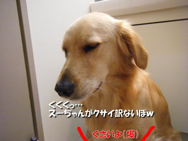 DSCF5002_20101118222857.jpg