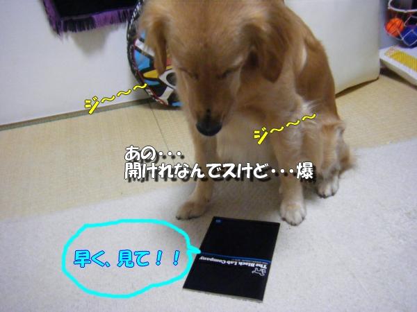 DSCF7129.jpg