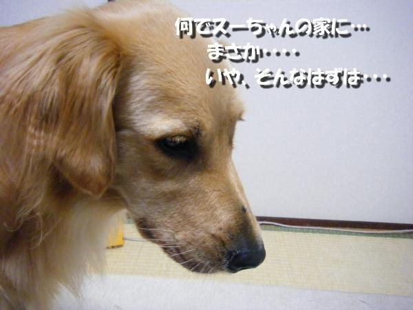 DSCF7511.jpg