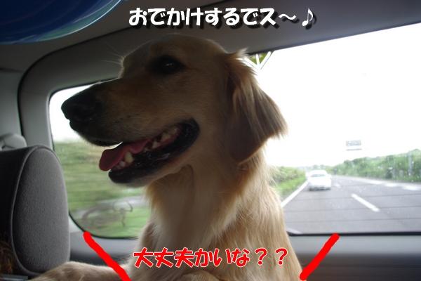 IMGP0080_20100825191021.jpg
