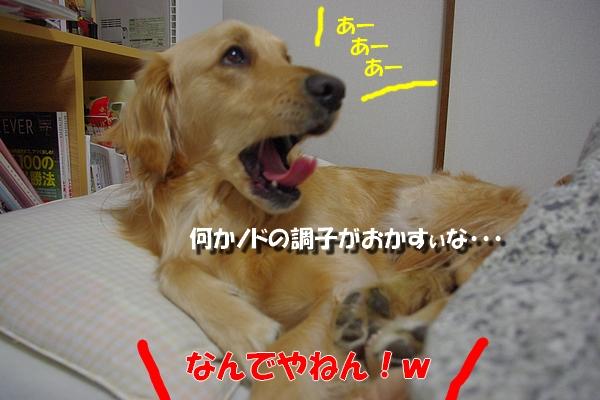 IMGP0338_20101121000325.jpg