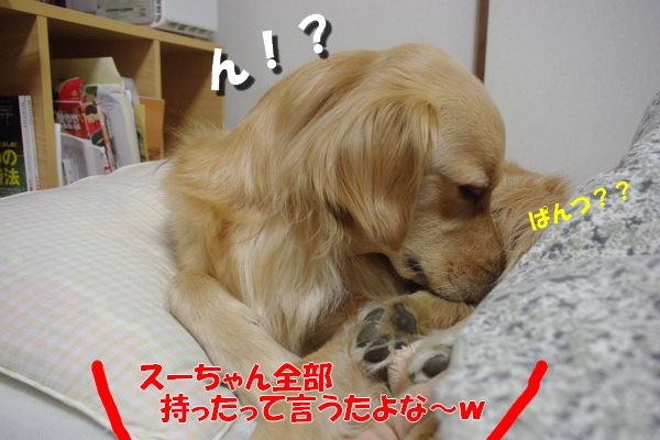 IMGP0341_20101121000324.jpg