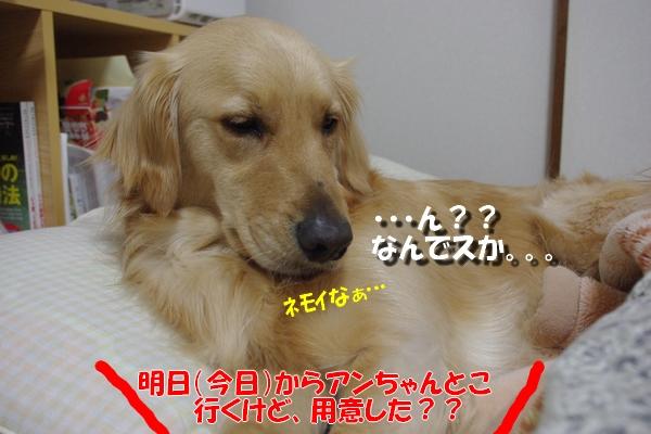 IMGP0343_20101121000323.jpg