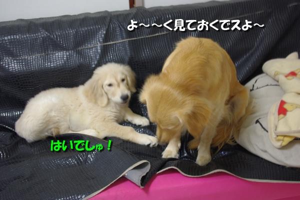 IMGP3159_20101002002409.jpg