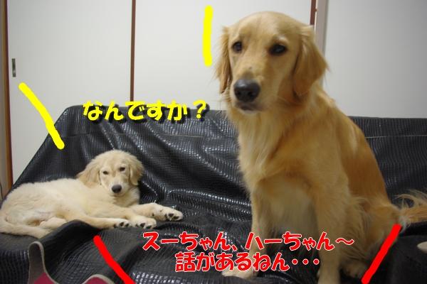 IMGP3259_20101002002437.jpg