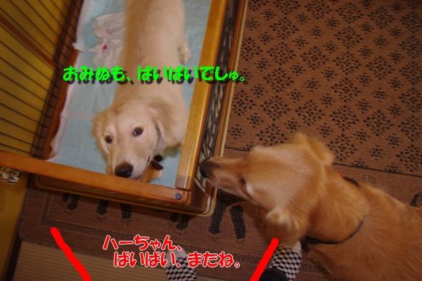 IMGP3342_20101005234900.jpg