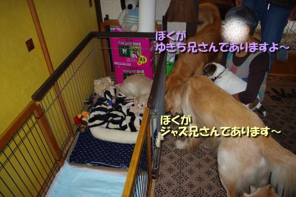 IMGP3346_20101005002736.jpg
