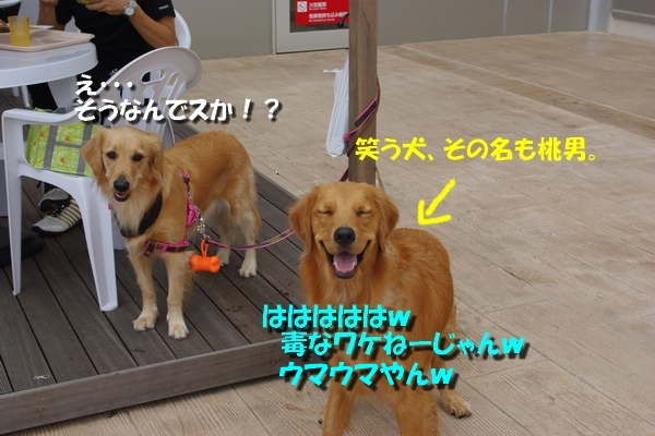 IMGP3489_20101008000524.jpg