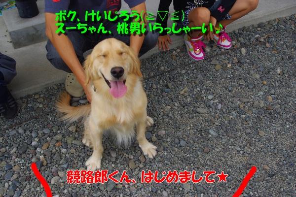 IMGP3524_20101009002558.jpg