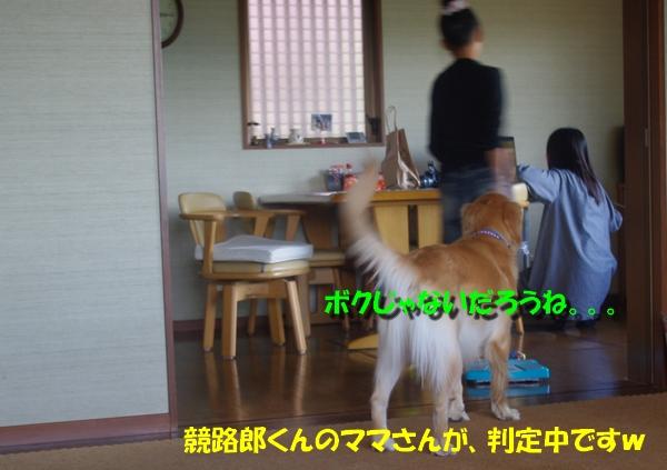 IMGP3575_20101010002203.jpg