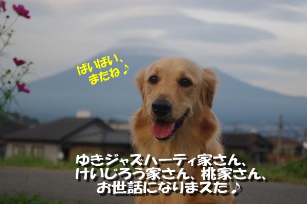 IMGP3637_20101011111911.jpg