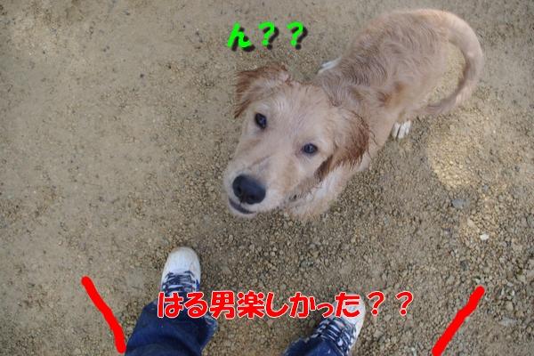 IMGP3804_20101016113042.jpg