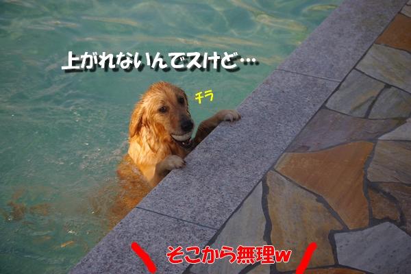 IMGP4080_20101018225720.jpg