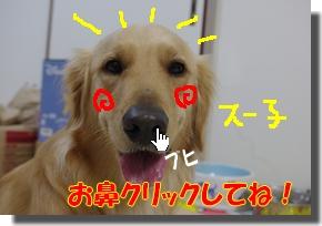 IMGP4227_20101112001841.jpg