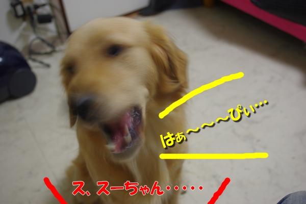 IMGP4336_20101114003603.jpg