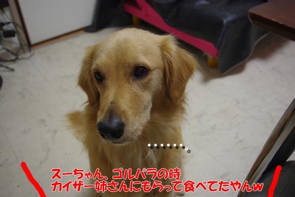 IMGP4346.jpg