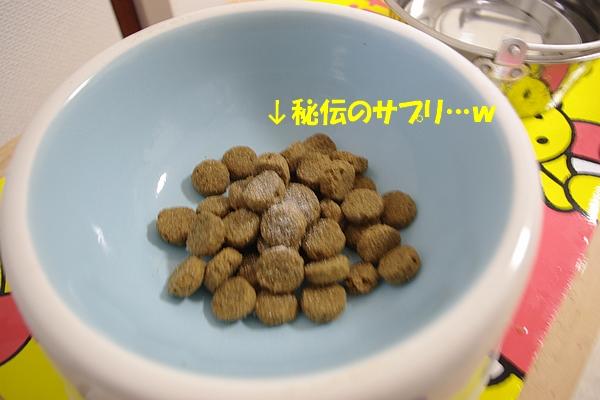 IMGP4381.jpg