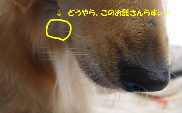 IMGP4445-1.jpg