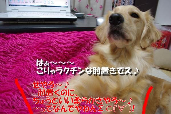 IMGP5021_20101102235126.jpg