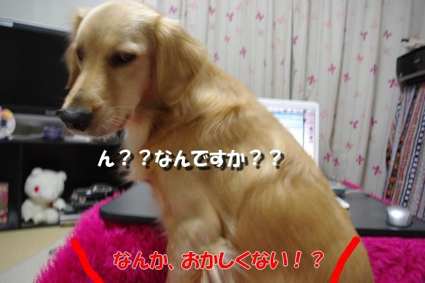 IMGP5023_20101102235124.jpg