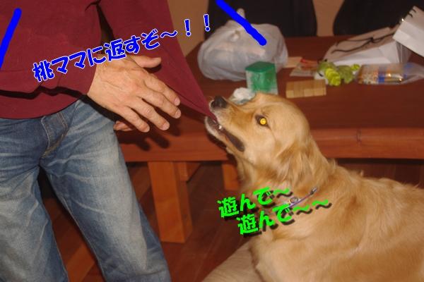 IMGP5778_20101129002811.jpg