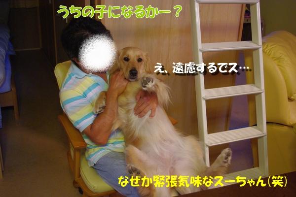 IMGP8374_20100617224338.jpg