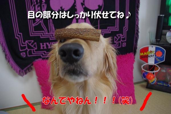IMGP8414.jpg