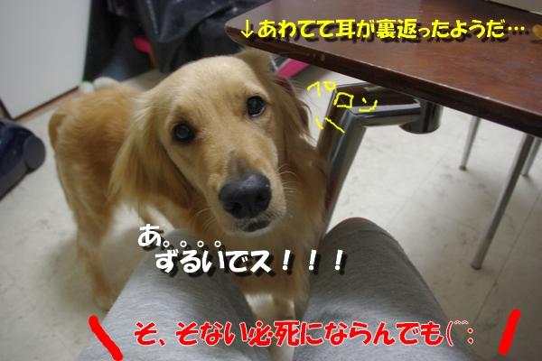IMGP8462.jpg