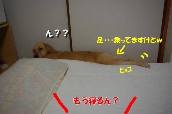IMGP8581.jpg