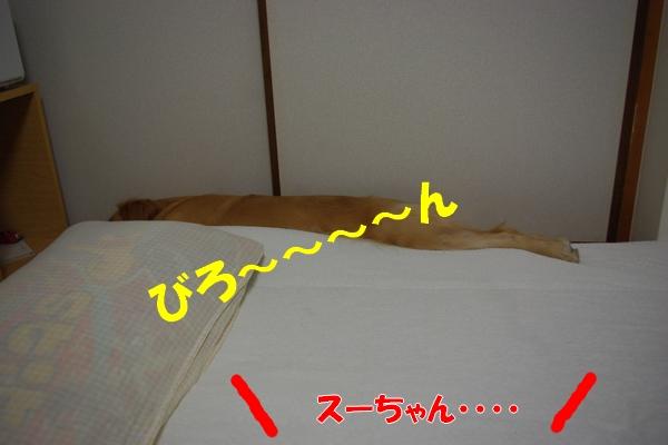 IMGP8582.jpg